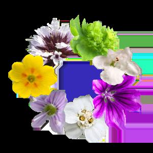 LamiDerm-Apex-fleurs-LifePharm-LPGN-Jean-Marc-Fraiche-VousEtesUnique.com