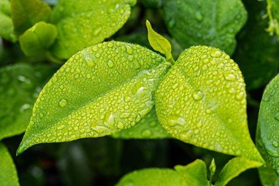 Principe-fondamentale-de-la-nutrition-plante-Jean-Marc-Fraiche-VousEtesUnique.com