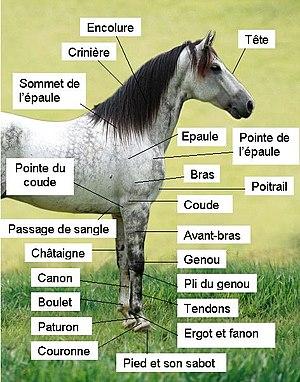 cbd-chevaux-Jean-Marc-Fraiche-VousEtesUnique.com
