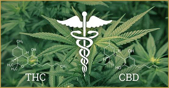 differences-thc-cbd-Jean-Marc-Fraiche-Hemp-Herbals-HB-Naturals