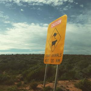 Kangaroo - cow road sign - Australie