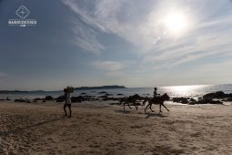 Plage_chevaux - Ngapali
