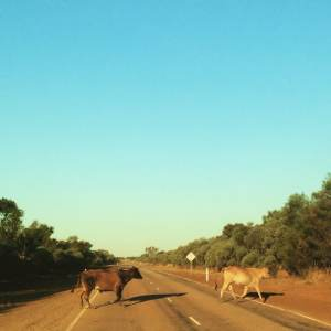 Abbey road version OZ - Northern Territory