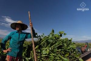Vie quotidienne_birman - Lac Inle