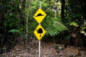 Roadsign Casoar - Daintree Rainforest