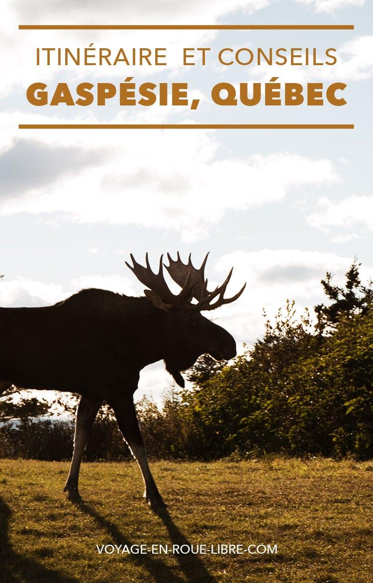 15 jours pour découvrir la Gaspésie ! Après un road trip sur les rives du Saint-Laurent, qui t' as emmené de Montréal à Tadoussac en passant par le Fjord du Saguenay, un nouveau voyage québécois t'attend. Essaieun itinéraire qui t'offrira la chance de voir des animaux sauvages et des paysages à couper le souffle : La Gaspésie !