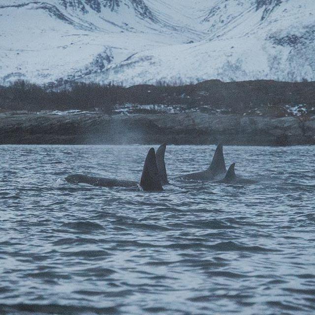 "Clara Domas : une collaboratrice du projet ""We are the orca"" de Little Gypsy."