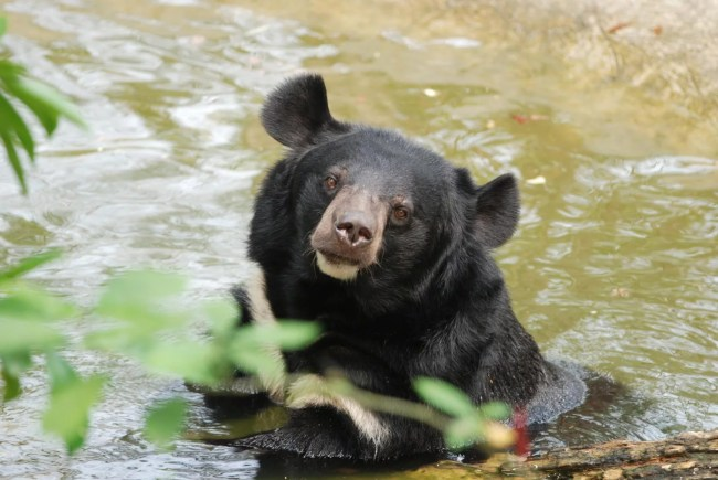 Moon bear at Nam Cat Tien par Kyle Horner