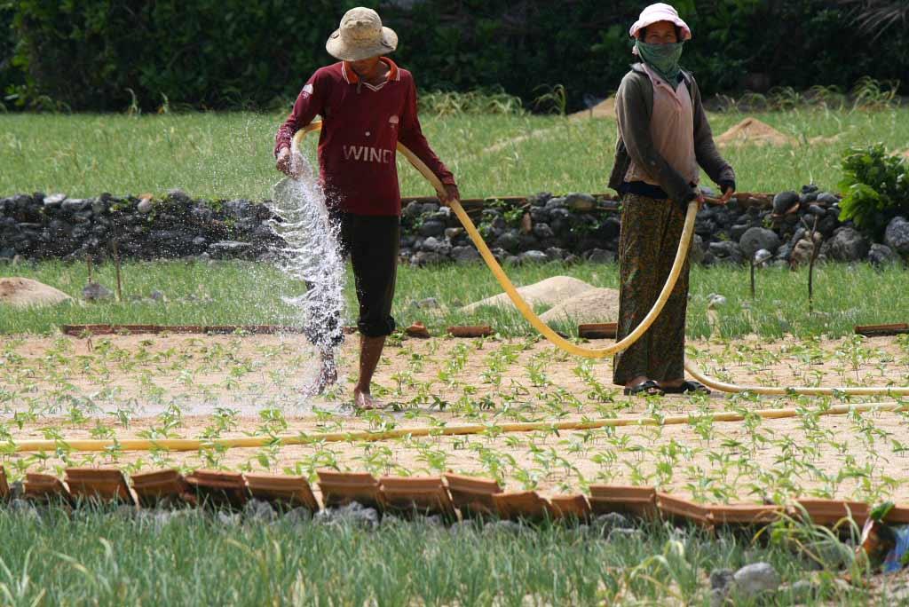 Irrigation à Ly Son - Vietnam