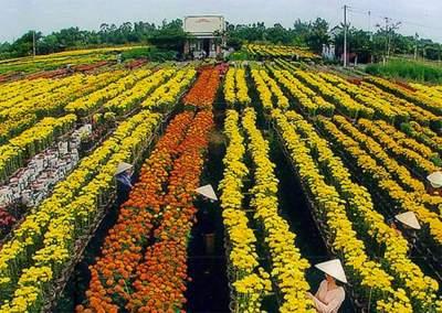 La saison des fleurs du Nord au Sud