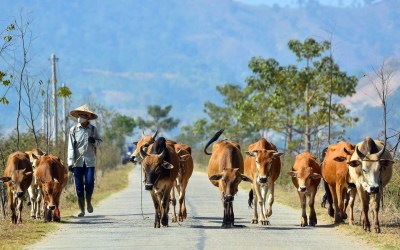 Les atouts touristiques de Đắk Lắk