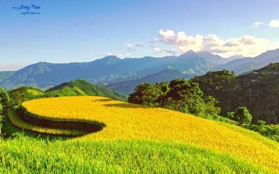 Les paysages magnifiques de Hoàng Su Phi