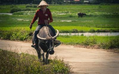 Quand le Vietnam célèbre le riz