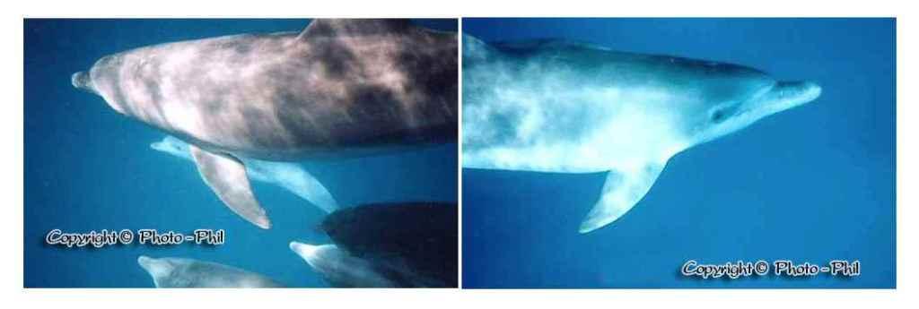 ircuit excursions zanzibar nager avec les dauphins