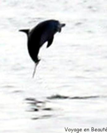 Flipper le dauphin nous accompagne lors des sorties plongées