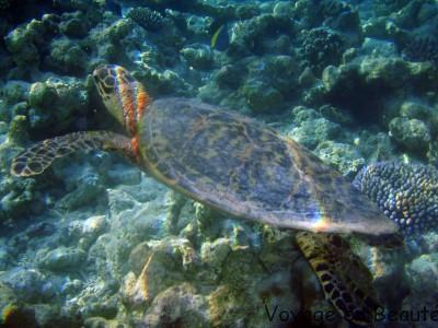 Notre amie la tortue