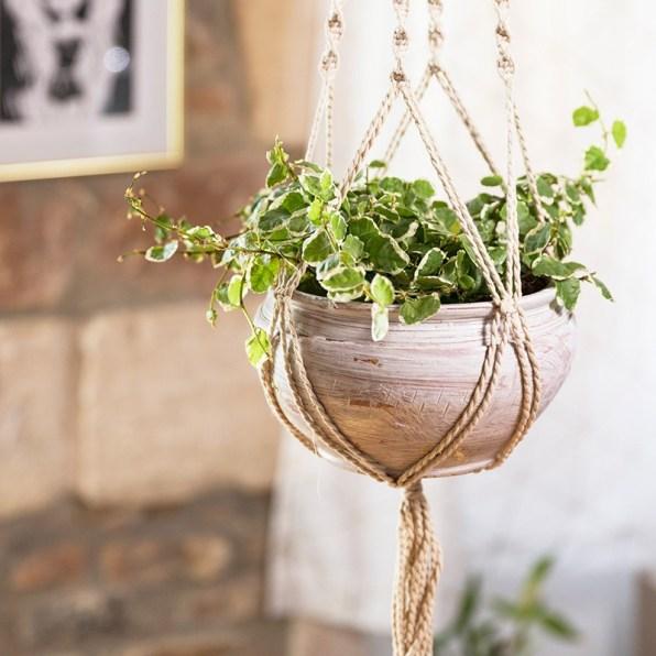 idee-cadeau-fete-des-meres-plantes-interflora