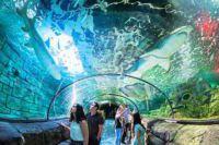 sydney-le-sea-life-sydney-aquarium