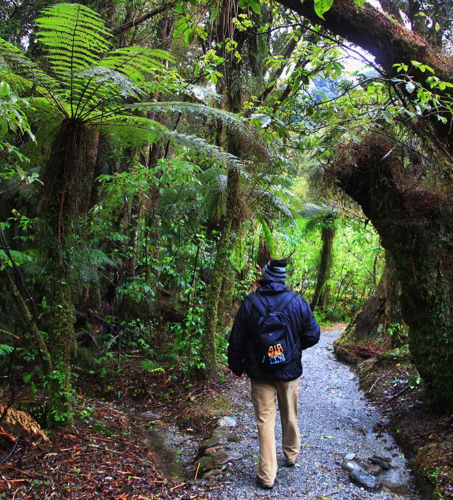 Rainforest, South Island, New Zealand - Taken by Diann Corbett, 09/2014.