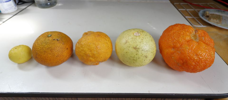 Speaking of round fruit... I challenge you to guess what these particular pieces of fruit are. **See below for answers.