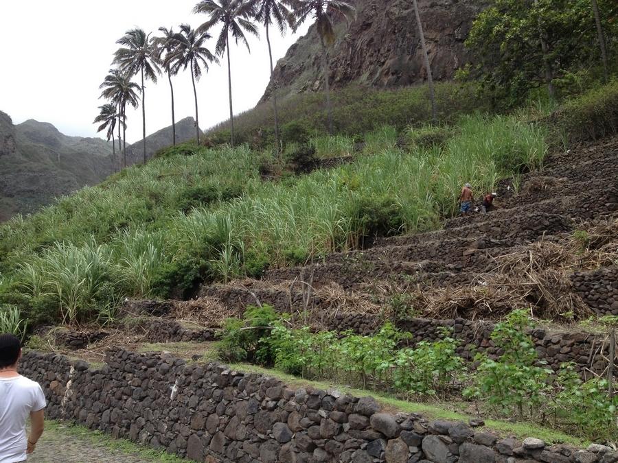 Terrace agricultur- Santo Antão, Cape Verde
