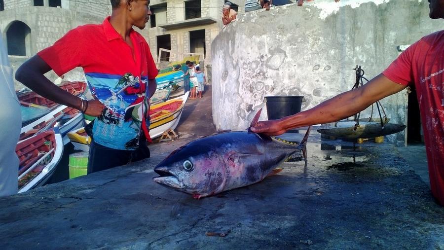 Preparing thuna after fishing - Ponta do Sol, Santo Antão, Cape Verde