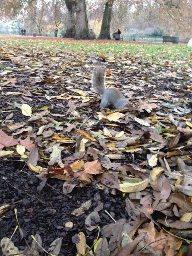 Un écureuil à St James Park - Londres, Angleterre