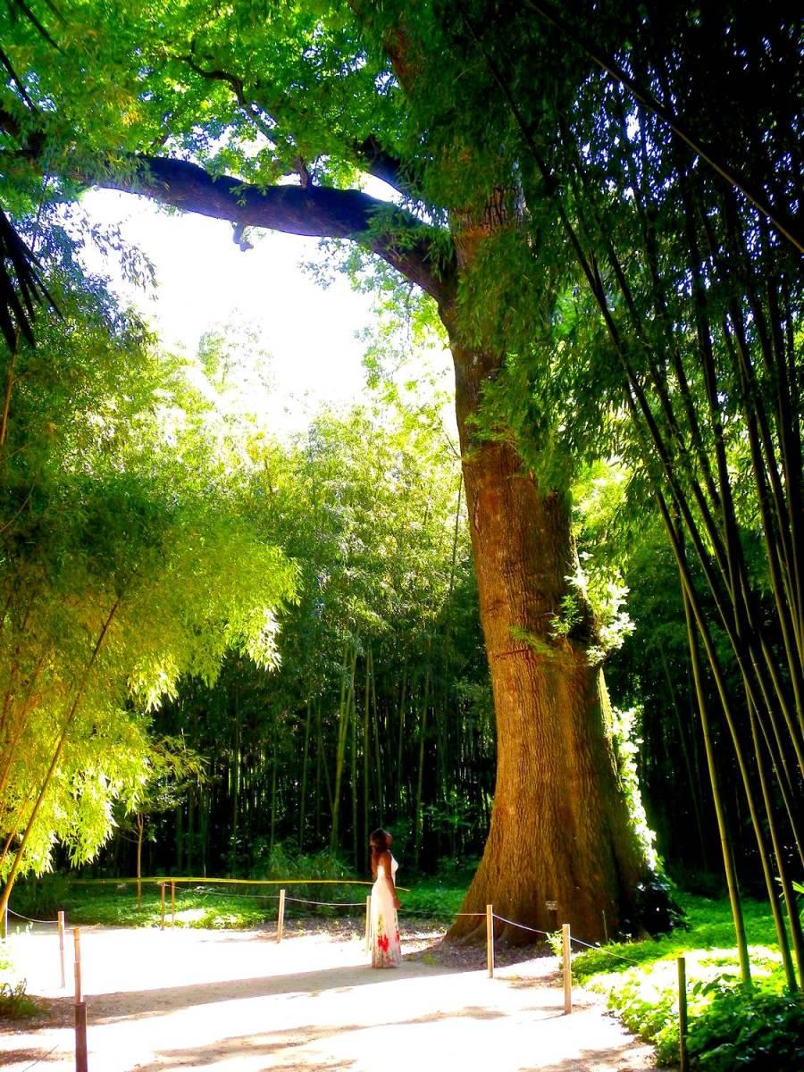 Nath devant un immense séquoia à la Bambouseraie d'Anduze - France