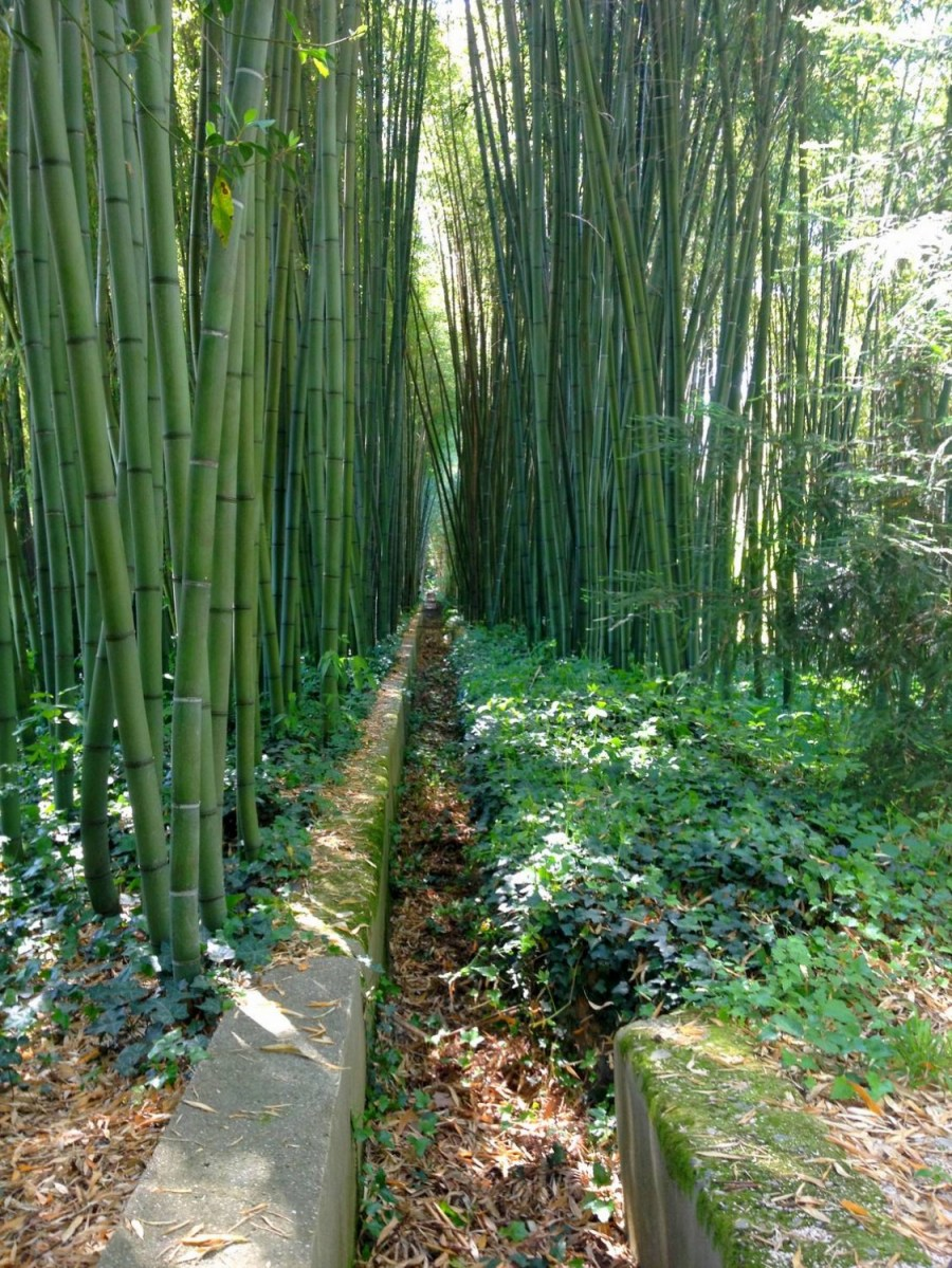 Bambouseraie d'Anduze, France