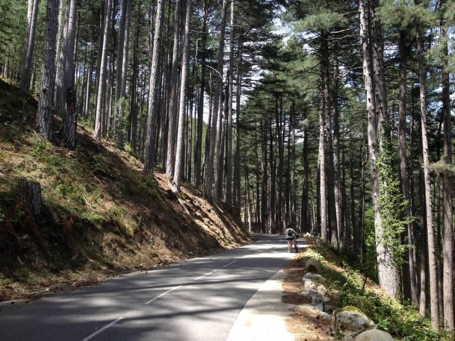 Route de montagne - Ghisoni, Corse