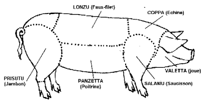 Sketch of a pig for the corsican charcuterie