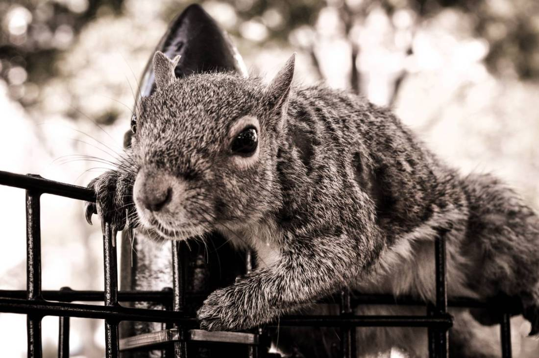 A squirrel in Battery Park - New York, United States