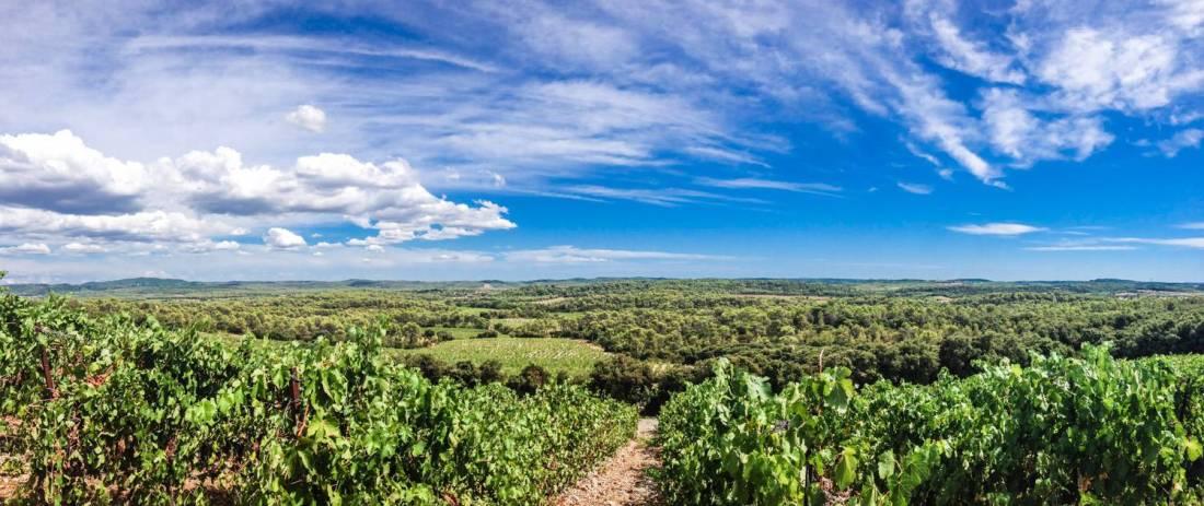 Haut Lirou vineyard - Saint Jean de Cuculles, France