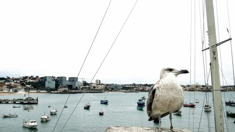 A seagull in the port of Cascais - Portugal