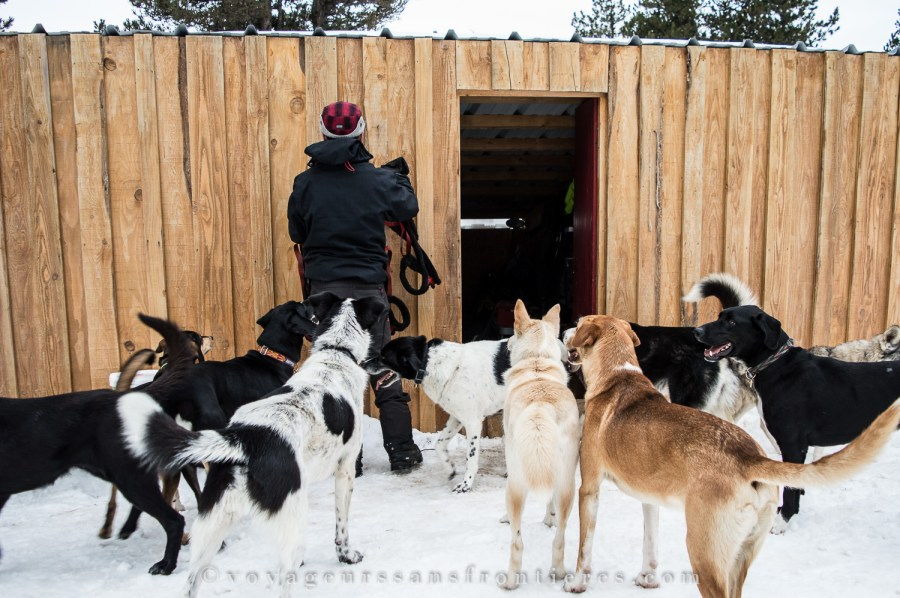 Sled dogs at the kennel in the Angaka Nordic Village - Plateau de Beille, France