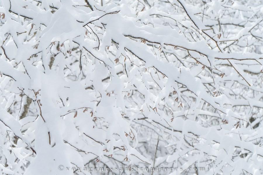 Branches enneigées près du Mont Châteleu dans la vallée de la Brévine - Jura Trois Lacs, Suisse