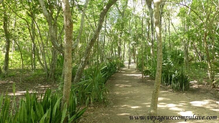 La végétation de Chichen Itzá.