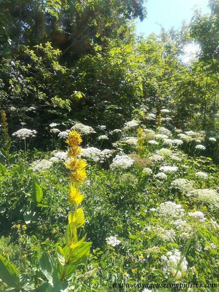 Vue sur la végétation dont il est possible de profiter tout au long de la randonnée.