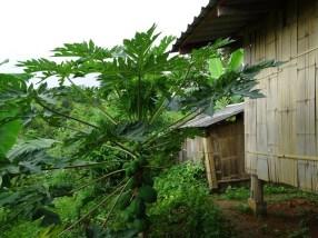 maison d'hôte Thaïlande