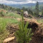 Împădurim zonele afectate
