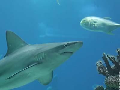 dédié à certains vendeurs qui sont des requins