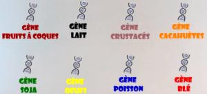 Gènes provenant d'aliments à tendance allergisants