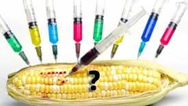 Conclusions sur les organismes génétiquement modifiés