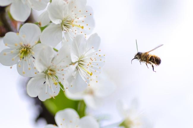 Bijen redden: praktische tips en achtergrondinformatie