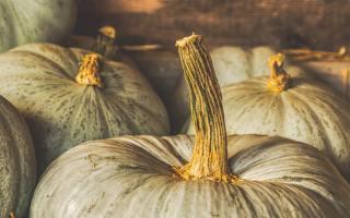 Duurzame activiteiten voor de herfst
