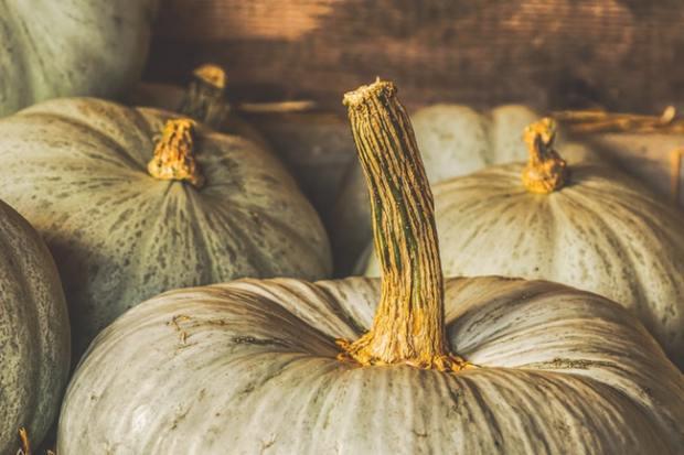 Duurzame activiteiten voor de Herfst: 5 ideeën