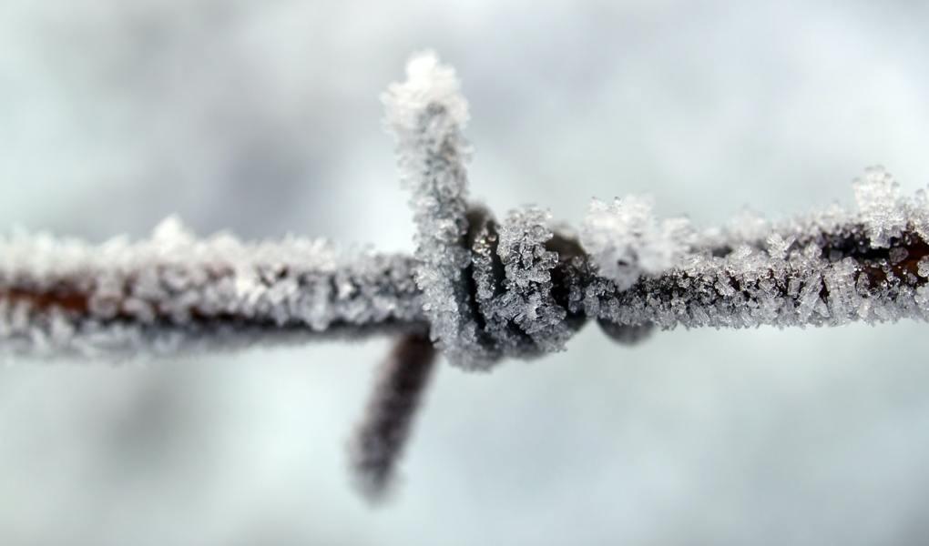 illustratieve afbeelding bij de blogpost: duurzame activiteiten voor binnen tijdens de winter. Een dennenbomen bos in de sneeuw. Fotocredit: Johann Piber