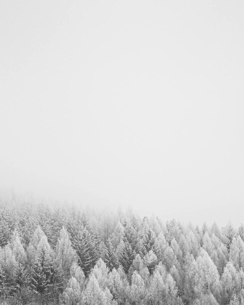 illustratieve afbeelding bij de blogpost: duurzame activiteiten voor  binnen tijdens de winter. Een dennenbomen bos in de sneeuw. Fotocredit: Jan Kopriva
