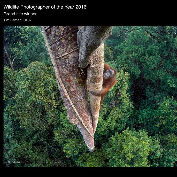 Wildlife Photographer of 2016