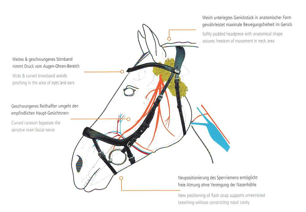 How the Anatomical Bridles from Schockemoehle Sports work